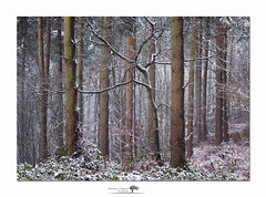 Winter Three (shaun.argent) Tags: woodland woods trees tree nature shaunargent seasons snow winter flora weather landscapes