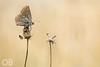 Papillon (Olivier Brosseau) Tags: flickrnature
