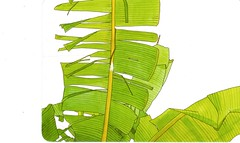 Postcrossing US-5070809 (booboo_babies) Tags: green tropical plant drawing japan art postcrossing illustration