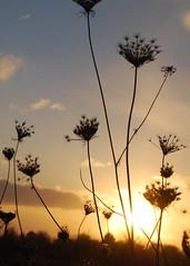Dank, o Gott, dass du gegeben (amras_de) Tags: winter hibierno zima hivern vinter vintro invierno talv negu talvi hiver geimhreadh tél vetur inverno hiems wanter žiema ziema ivèrn iarna mmernu kis licht luz lig svjetlost llum svetlo lys light lumo valgus argi valo lumière solas fény lumine ljós luce lux liicht šviesa gaisma lutz swiatlo lumina luci svetloba ljus isik