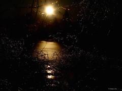 Ice Web Sunrise (the mindful fox) Tags: sunrise icestorm ice milllakepark abbotsford fraservalley