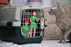 cage (Vlastelin Nichego) Tags: dolls abjd bjd cat lumedoll koitelf koit glühwein limhwa mari