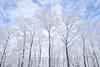 frost-covered trees (peaceful-jp-scenery (busy)) Tags: urabandai kitashiobaramura nekoma ski fukushima snow ice 樹氷 スキー 北塩原村 猫魔スキー場 裏磐梯 福島 日本 sony cybershot 20mp dscrx100m3 carlzeiss 2470mmf1828
