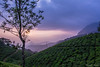 Sunset in Tea plantation (Saurabh Bayani) Tags: tea cloud sunset green field tree blue voilate sky foothpath munnar kerala india d7100 nikon landscape mountain maountaintop fog layer mist hdr
