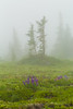 Subalpine Meadow in Fog on Mount Townsend in Olympic National Forest (Lee Rentz) Tags: buckhornwilderness hoodcanalrangerdistrict july mounttownsend mttownsend olympicmountains olympicpeninsula olympics pacificnorthwest usforestservice washington washingtonstate america clouds cloudy color dripping droplets flora flower flowering fog foggy green lush meadow mist misty mountainous mountains mysterious nature northamerica northwest olympicnationalforest outdoor outdoors overcast plant subalpine summer terrain theolympics trees usa water weather wild wildflower wildflowers