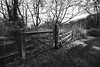 (see it, shoot it) Tags: fujis3pro tokina 1116mm mono silverefex brothertonpark dibbensdalenaturereserve wirral frost winter scene gate fence