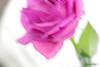 Double Exposure: Macro Mondays (bluehazyjunem) Tags: macromondays doubleexposure pentaxk70 tamron90 rose