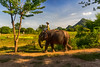 Tired after long day (Victoria Ditkovsky) Tags: animal elephant peasant thailand outdoor nature landscape