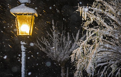 It's snowing (Paula Darwinkel) Tags: snow snowing winter lantern light night lowlight snowflake tree nature outdoor