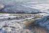 Cows grazing in the snow (Keartona) Tags: hayfield rowarth kinderscout peakdistrict derbyshire highpeak england snow winter morning bright sunny weather landscape hills moors moorland lantern pike cows