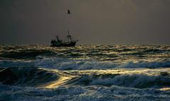 dark sea (Wöwwesch) Tags: sony sonyalpha ice6000 boat fishing ocean sea sunset beach coast northsea sky waves seagull