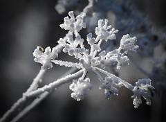 Crystal for Christmas (Ormio) Tags: crystal christmas karácsony frozen tree cold ice skow jég kristály zúzmara dér noel navidad рождество boże narodzenie