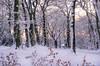 Christmas light through the snow (SimonLea2012) Tags: infocus highquality