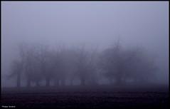 Coulongé (Sarthe) (gondardphilippe) Tags: coulongé sarthe maine paysdelaloire paysage landscape brouillard fog arbres trees brum ciel pelouse arbre brume champ parc forêt ngc sundaylights