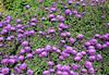 Little Garden (elianek) Tags: garden flowers flower purple flores verde natureza nature zoom pittockmansion portland oregon estadosunidos eua usa