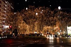 Pageant of light (kat-taka) Tags: ã¬ãã snow light japan sendai pageant illumination tree winter