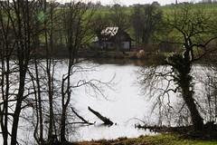 Wintersonne  am Aalkistensee (reipa59) Tags: sun sea enten natur haus bäume ufer wintersonne sonne see aalkistensee badenwürttemberg