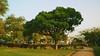 maputo (meeeeeeeeeel) Tags: jardimdosprofessores nikon ensolarado sol sunny outdoors capitalsoftheworld capital cidadeafricana africancity african africa park parque naturezaurbana urbannature arvore tree moçambique mozambique mz moz maputo