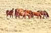 Wild Horses copy (MReveles) Tags: canon 5dsr on1 100400f4556lisii wildhorses horses