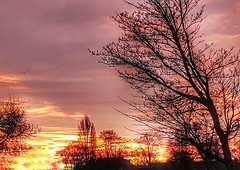 A scorching sunrise on a cold morning 😨👍🌞 (LeanneHall3 :-)) Tags: sunrise sunday red orange sun trees branches sky skyscape landscape samsung galaxys7edge hdr