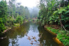 Home of Platypus (Kat-i) Tags: australien australia brokenriver eungellanationalpark urwald bush natur nature fluss river spiegelungen reflections wasser water bäume trees nikon1v1 kati katharina 2017 queensland