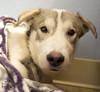 Nol (Shutters for Shelters) Tags: shuttersforshelters s4s tcras tellercountyregionalanimalshelter colorado jillt8 nol sick dogs