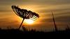 Sunset (.Guillermo.) Tags: sunset puesta de sol sun atardecer anochecer cielo sky paisaje landscape nikon sigma siluetas