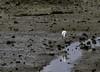 20171225-0I7A4888 (siddharthx) Tags: singapore sg redearedslider sungeibulohwetlandreserve canon7dmkii ef100400mmf4556lisiiusm nature wildlife migratorybirds whitebreastedwaterhen milkystork whimbrel commongreenshank commonredshank lessersandplover curlewsandpiper chineseegret greatercrestedtern orientalpiedhornbill collaredkingfisher orientaldollarbird greyheron vulnerable mangroves wetlands marsh nparksbuzz tree water mangrove bird landscape paintedstork purpleheron sky animal greategret snowyegret habitat nightheron forest wood monitor watermonitor lizard saltwatercrocodile grass malayanwatermonitor asianwatermonitor commonwatermonitor twobandedmonitor ricelizard ringlizard plainlizard nomarklizard periophthalmusargentilineatus rock river foliage gerridae waterstrider pondskaters waterskippers jesusbugs birdsinflight birdsinthewild wetland egret crab