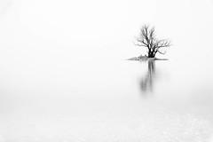bei Nebel am Rheinspitz (aamuru) Tags: wasser winter baum schwarzweiss bodensee landschaft bw see gaisau vorarlberg österreich at