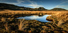 1000-acre Plateau (Jaims Gibson) Tags: doc newzealand tramping kahurangi tarn lake water sunset tussock grasses httpswwwjamesgibsonphotographycom