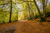Leaving Waggoners wells (Foto_Art_) Tags: uk nikon d610 1835mm wide countryside british beech leaves autumn colour gold