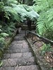 australian national botanic garden-45 (billdoyle[mobile]) Tags: australiannationalbotanicgarden act garden botanicgarden australia australiancapitalterritory anbg canberra australian billdoyle canberratripdec17jan18