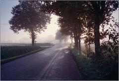 Morgenlicht (Ulla M.) Tags: nebel fog bäume trees olympusxa selfdeveloped selbstentwickelt 35mm kleinbild reflectaproscan10t licht lichtstrahlen sonnenstrahlen umphotoart rangefinder analog analogue