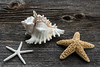 Trendy Stylish Starfish and Seashell on Vintage Barn Board With Copyspace (blurMEDIA Stock) Tags: stock authentic barnboard beach beachdecor beachfront blurmedia blurmediastock copyspace creativecommons decor decoration decorations ebay ecommerce etsy fresh homedecor modern nautical ocean online product productphotography retail retro royaltyfree rustic sea seashell shell shopify simple starfish stockphotography store stylish summer trendy vintage web website windowlight