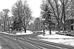 Unionville  Snowy Street (rcss2800) Tags: road tree snow park landscape street trees streets roads black white monochrome blackandwhite