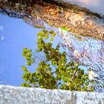 Sky Mirror thumbnail
