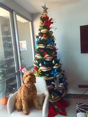 Shelby's Carolina is enjoying her Christmas in Columbia!