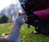 2017-12-02-0102 (Kevin Maschke) Tags: london fuji fujifilm fujifilmxt2 fujixt2 fujix city londoncity londonstreets nature outdoors air freshair squirell animal wildlife