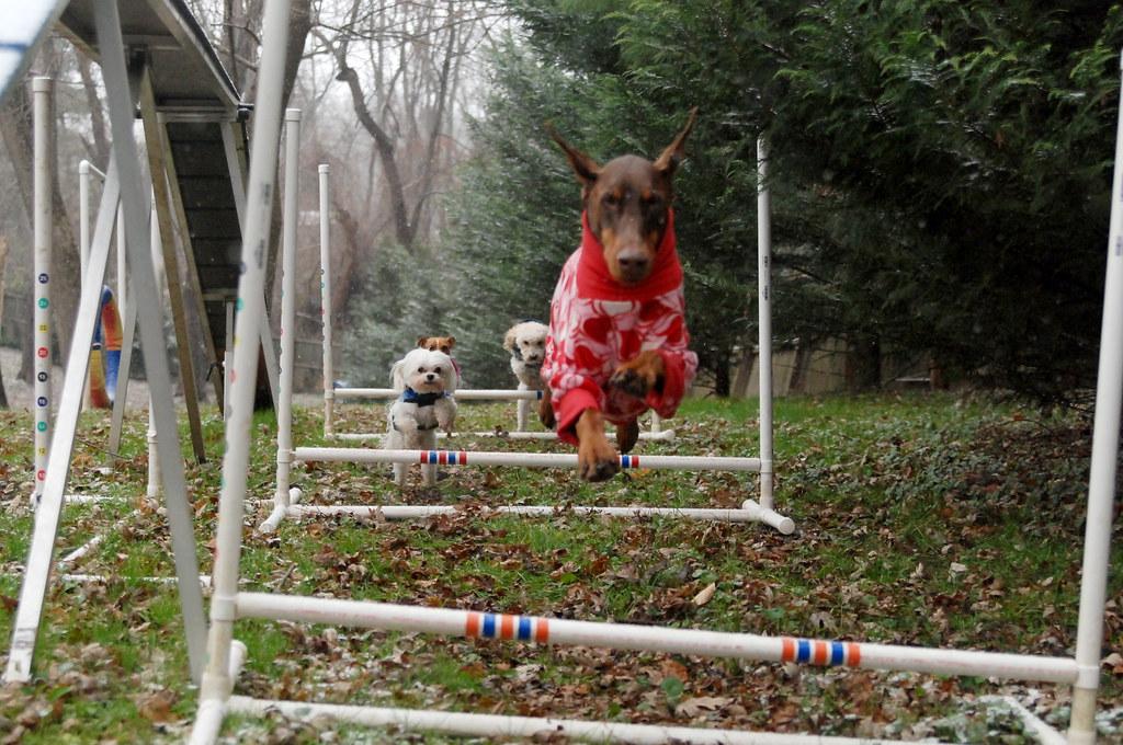 Free Dog Agility Park Kent