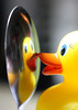 Shiny Metals - for Smile On Saturday! (RiverCrouchWalker) Tags: ducky whereswellyorhelloduckytoday shinymetals smileonsaturday spoon reflection