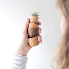 The tiniest little wooden bowls, perfect for little trinkets or even an airplant. Aren't they the cutest? We're open until 7 with plenty of thoughtful gifts and plants. (The ZEN Succulent) Tags: the zen succulent terrarium instagram