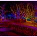 Holiday Lights Redoux