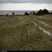 20150711_24 Tiny white road through grass & gloom | Trail between Herrvik & Sysne, Gotland, Sweden