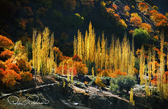 Fall Colors (TARIQ HAMEED SULEMANI) Tags: sulemani supershot sensational autumn hunza fall colors tariq tourism trekking tariqhameedsulemani travel theunforgettablepictures theperfectphotographer the4elements gilgitbaltistan