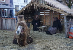 Kerstal in Heusden  Maria en Jozef (ditmaliepaard) Tags: mariaenjozef heusden kerststal opdefiets a6000 sony