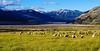 Arthur Pass (Caroline Balme Photography) Tags: newzealand travelaroundtheworld roadtrip whv