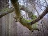 Accrobranches (Clydomatic) Tags: arbre branches pareidolie visage