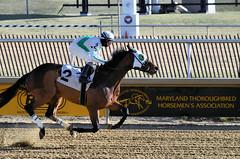 "2017-12-26 (43) r4 Steve Hamilton on #2 Cobh (JLeeFleenor) Tags: photos photography maryland md horse jockey جُوكِي ""赛马骑师"" jinete ""競馬騎手"" dżokej jocheu คนขี่ม้าแข่ง jóquei žokej kilparatsastaja rennreiter fantino ""경마 기수"" жокей jokey người horses thoroughbreds equine equestrian cheval cavalo cavallo cavall caballo pferd paard perd hevonen hest hestur cal kon konj beygir capall ceffyl cuddy yarraman faras alogo soos kuda uma pfeerd koin حصان кон 马 häst άλογο סוס घोड़ा 馬 koń лошадь laurelpark marylandraces races outdoors outside winter cold"
