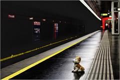 Wolfi wartet auf die U-Bahn in Wien (WolfiWolf-presents-WolfiWolf) Tags: wolfiwolf wolfi wolf wien ubahn metro vienna diagonal yellow solitude loneliness waiting alone kurzvordemvollmond derprächtigste dirigent jazzinbaggies österreich schweinebauch schöpfung blue conductor creator dirigierendster derschönste dereinzigartigste eneamaemü er fuddlers glück augen he himmel licht majestic lupus lichtkreiserln multiversen öhrchen pups quanten reise strahlen tanz universum ufo vollmond multiverses explorant farky zügellos spaziergang marieschen