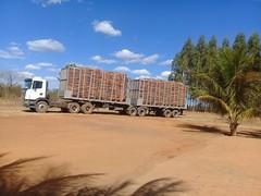 "GWD Forestry eucalyptus harvesting Brazil <a style=""margin-left:10px; font-size:0.8em;"" href=""http://www.flickr.com/photos/47172958@N02/38556148735/"" target=""_blank"">@flickr</a>"